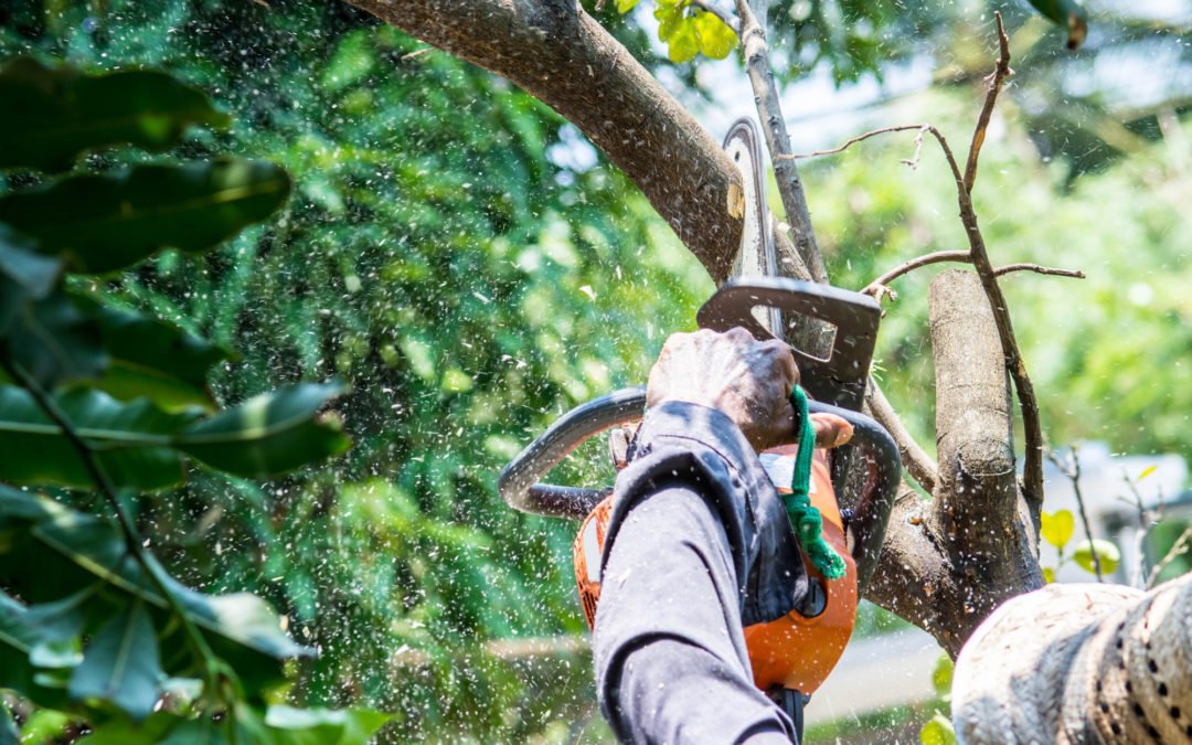 Do You Need a Permit to Cut Down a Tree in Florida?